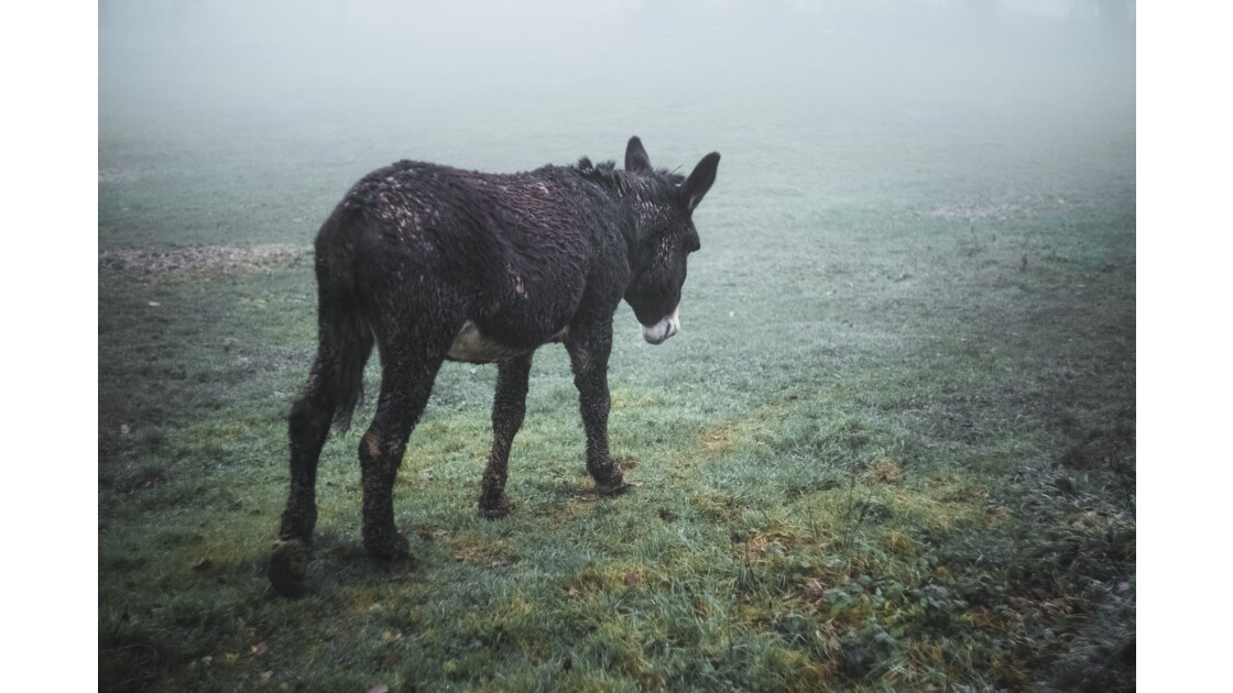 L'âne triste
