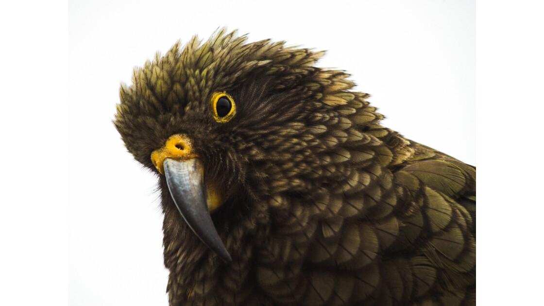 Oeil de plumes
