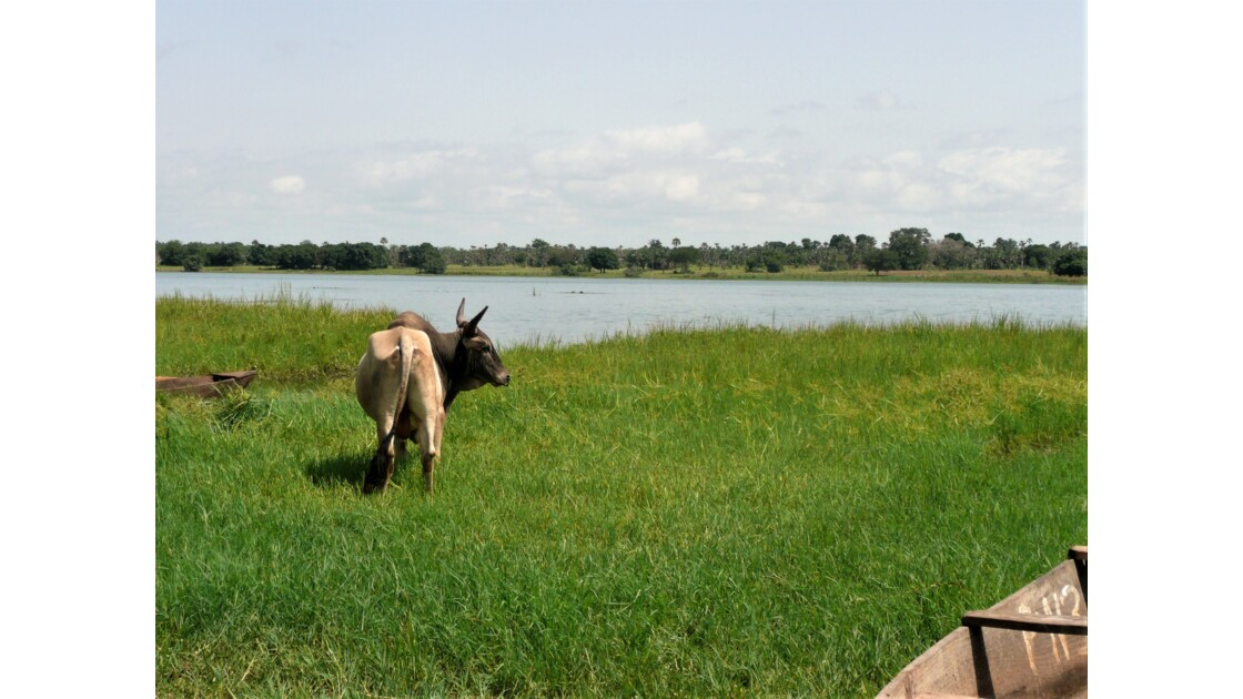 Lac de Tengrela