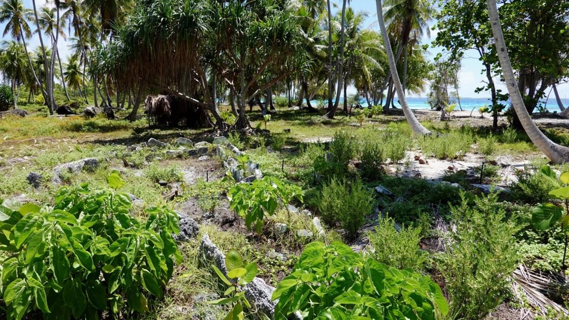 Tuamotu Fakarava - Marae Tahiri Vairau 4