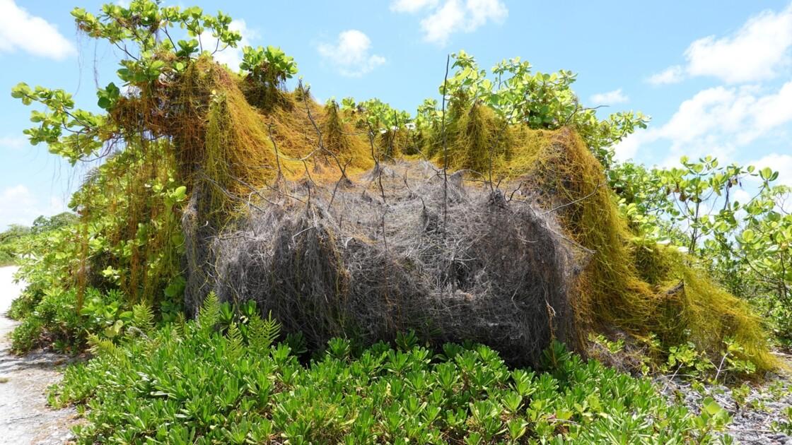 Tuamotu Fakarava - Sur la piste de Rotoava 1