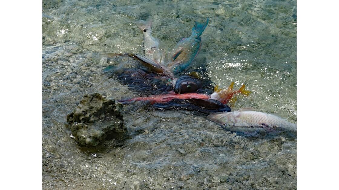 Tuamotu Rangiroa - Retour de pêche 3