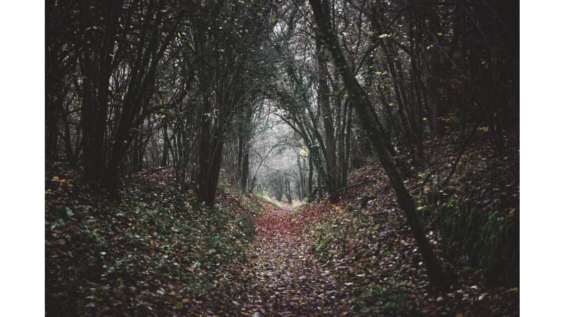 Tunnel de branches