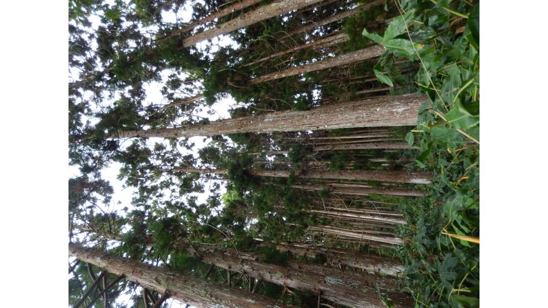 Forêt enchanteresse