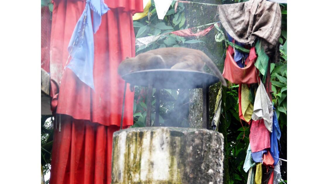 Le temple des singes à Darjeeling
