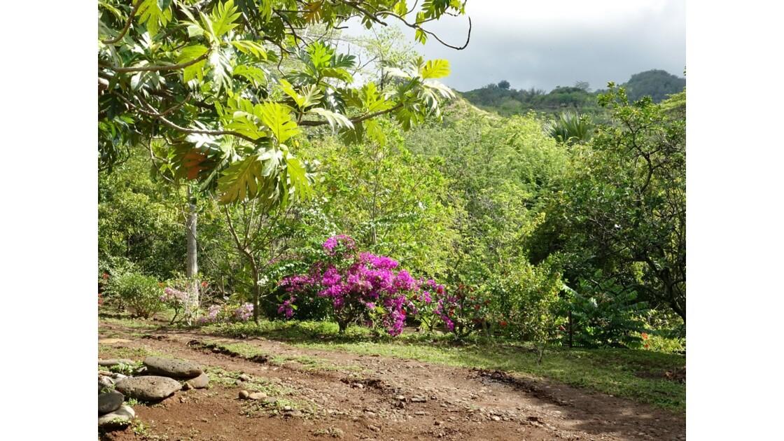 Les Marquises Ua Huka - Arboretum de Vaipaee 2