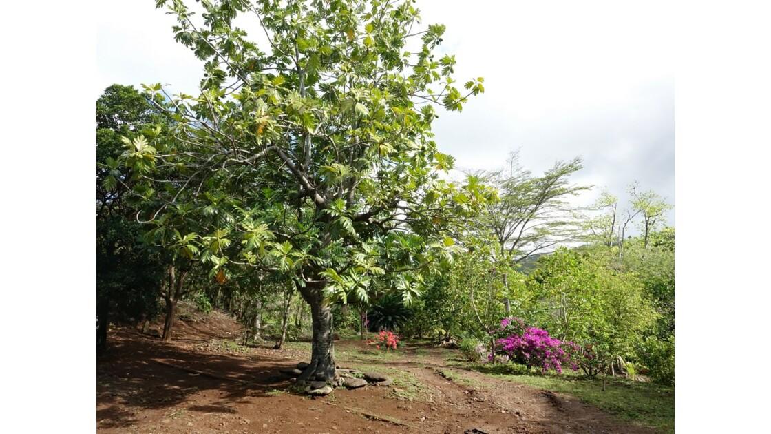 Les Marquises Ua Huka - Arboretum de Vaipaee 3