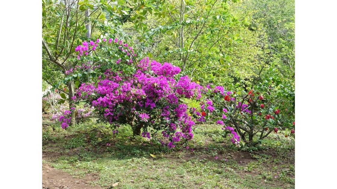 Les Marquises Ua Huka - Arboretum de Vaipaee 4