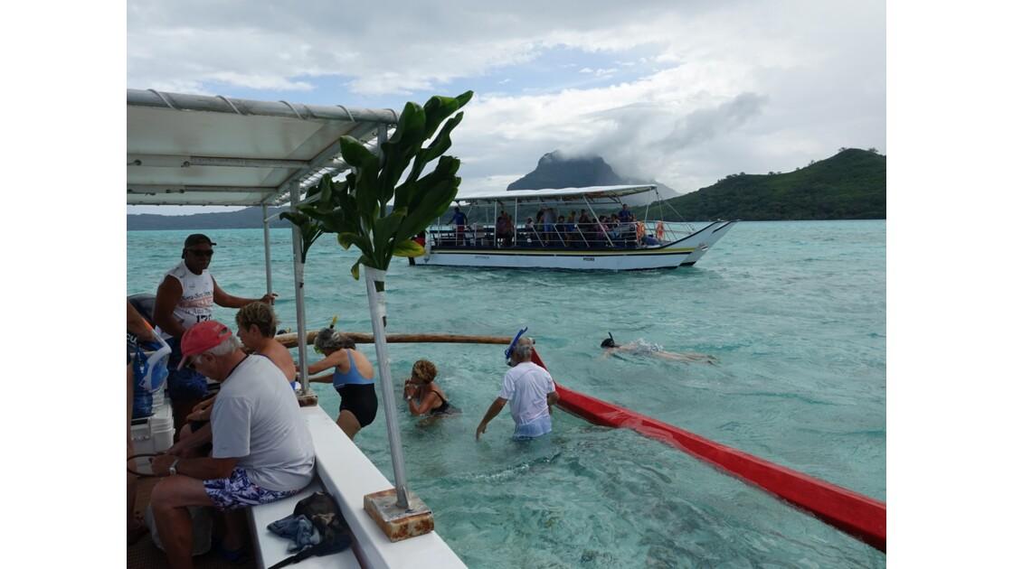Bora Bora Nage avec les requins et les raies manta 9