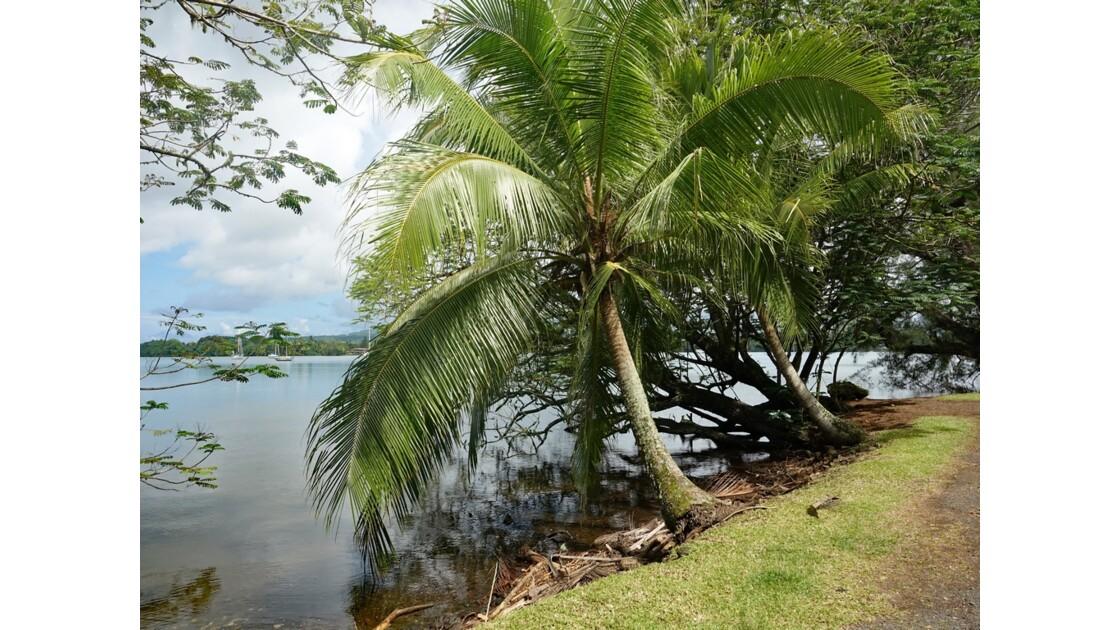Tahiti Nui Route de Papeari 1