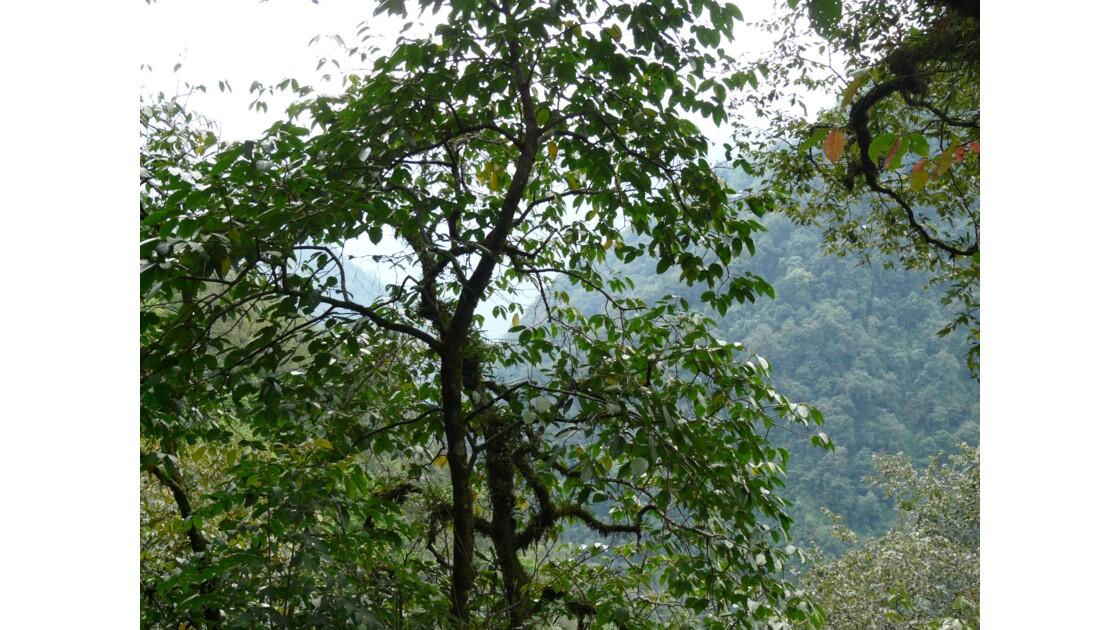 Trekking au Sikkim