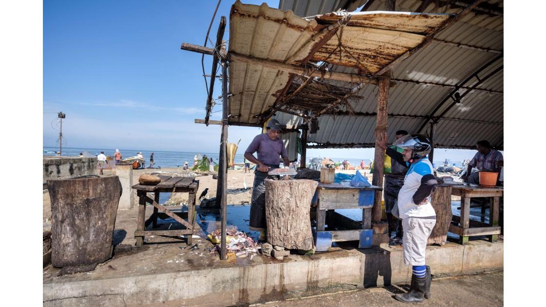 Le marché aux poissons de Negombo