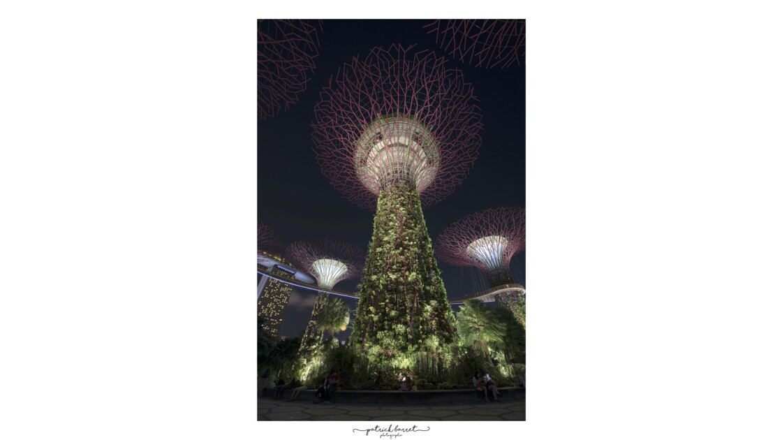 Gardens by the Bay – Singapour © P A T R I C K • B A R R E T