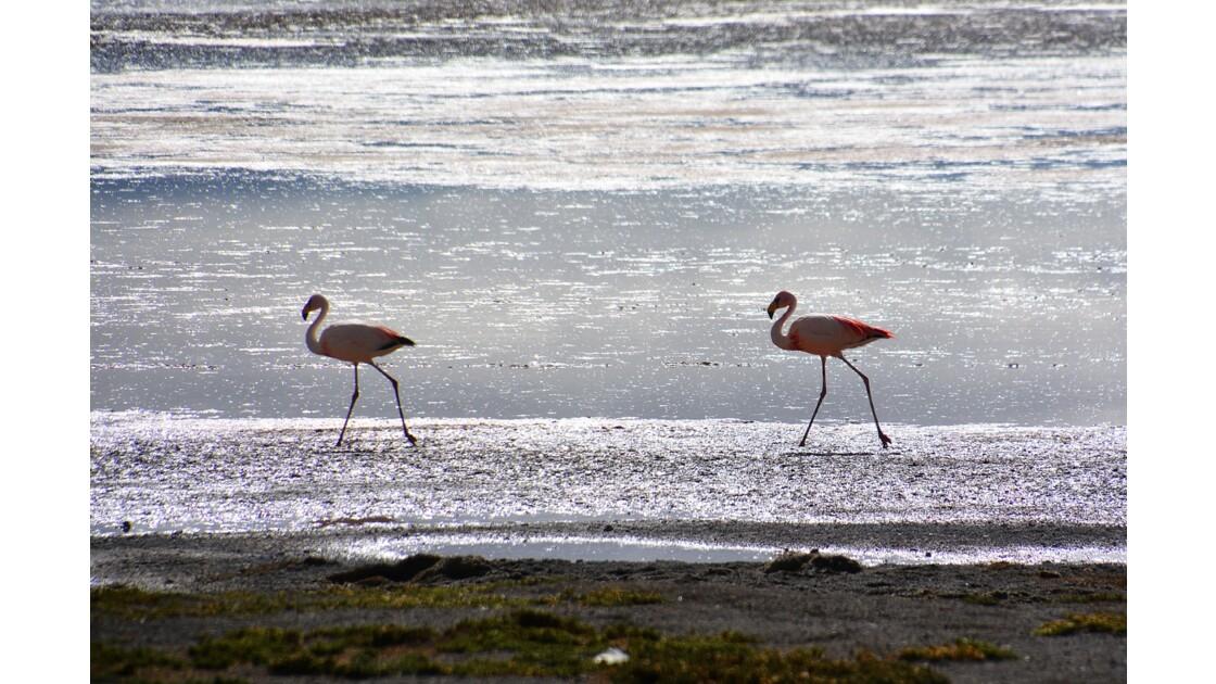 laguna colorada Bolivie