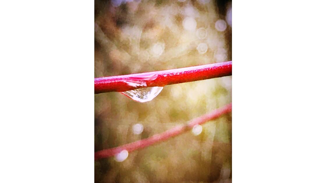 Pas de pluie pas de vie