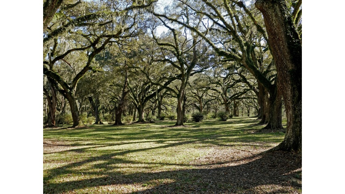 St Francisville Greenwood Plantation 6