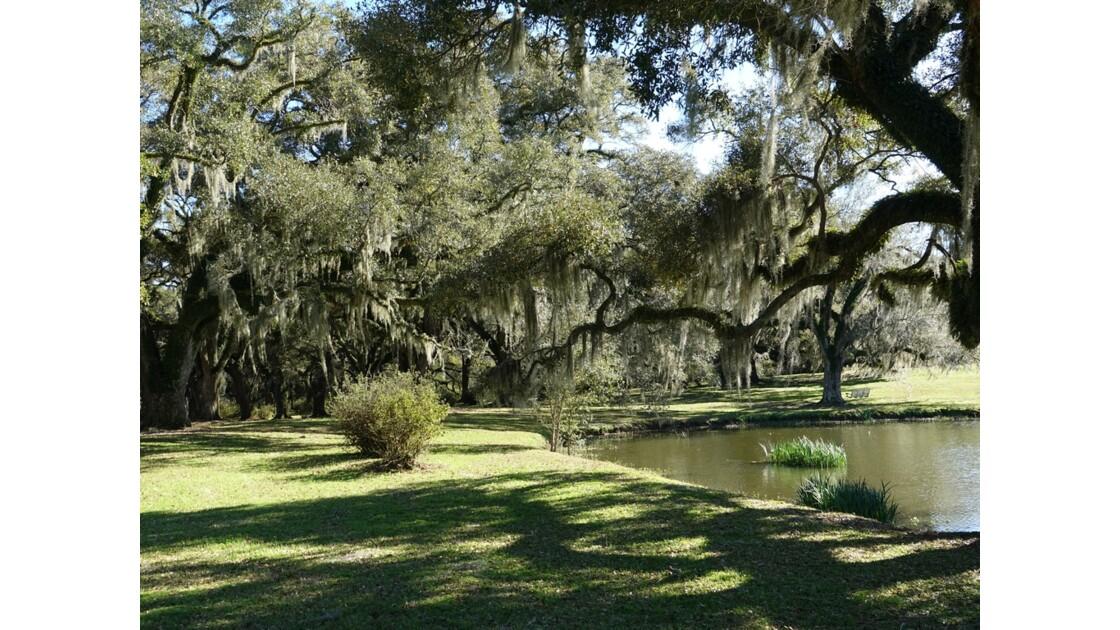 St Francisville Greenwood Plantation L'étang et la mousse espagnole 1