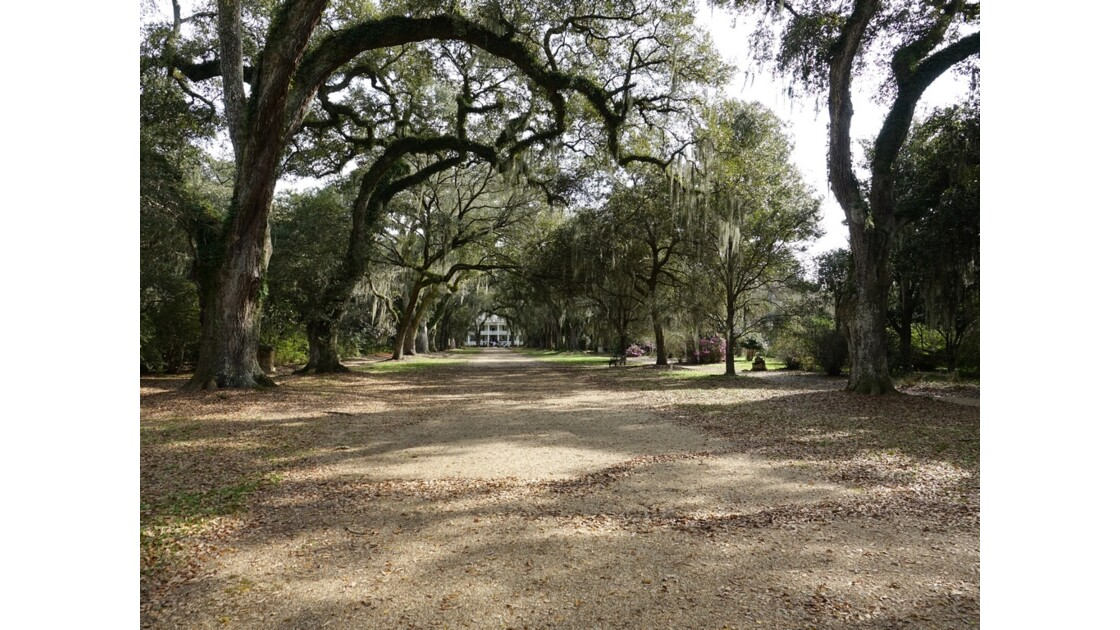 St Francisville Rosedown Plantation and Gardens 6