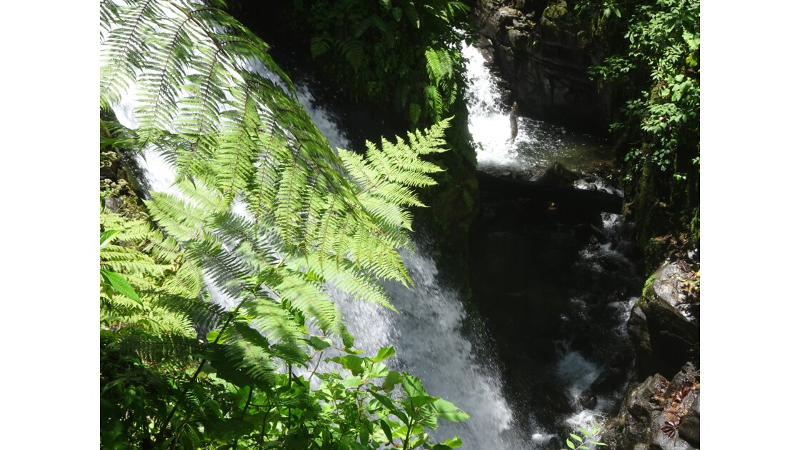 Waterfalls garden