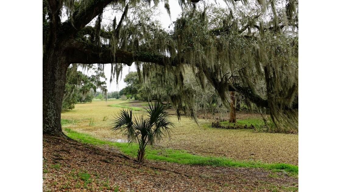 Avery Island Jungle Gardens Mousse espagnole 2