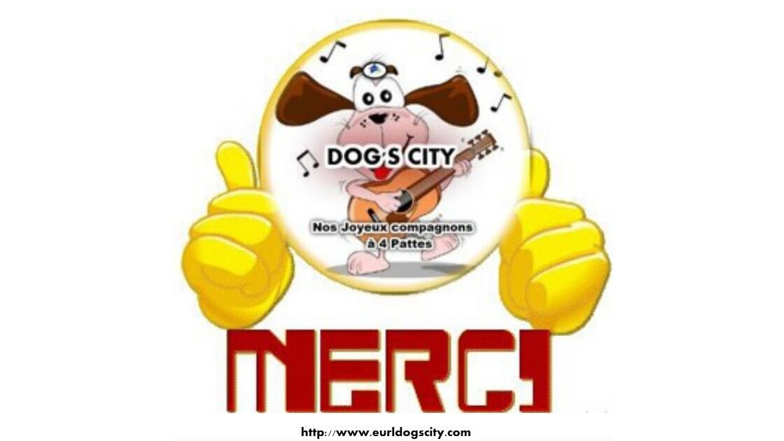 """DOGS CITY """" Nos COMPAGNONS à 4 pattes"""