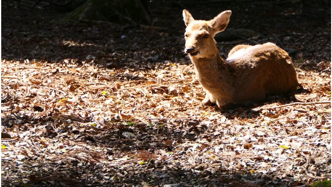 Le parc de Nara est un paradis que je conseille