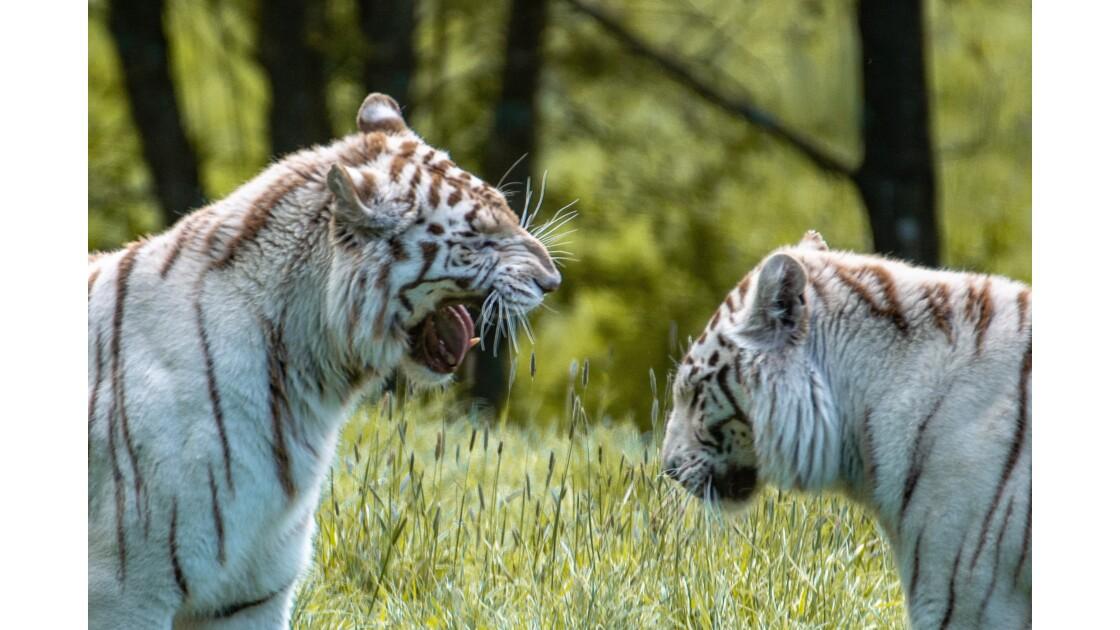 Cerza , parc animalier