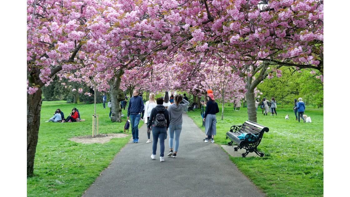 Londres: Parc de Greenwich
