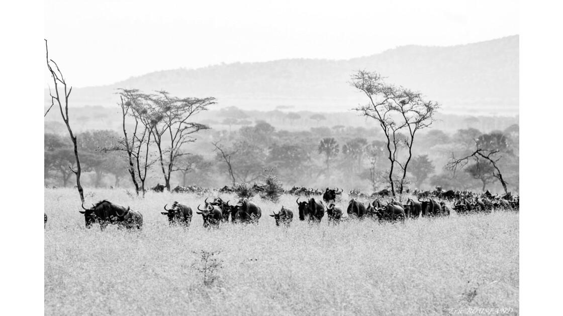 Tanzanie en N&B