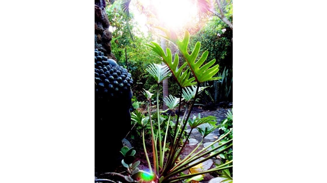 Végétation flamboyante