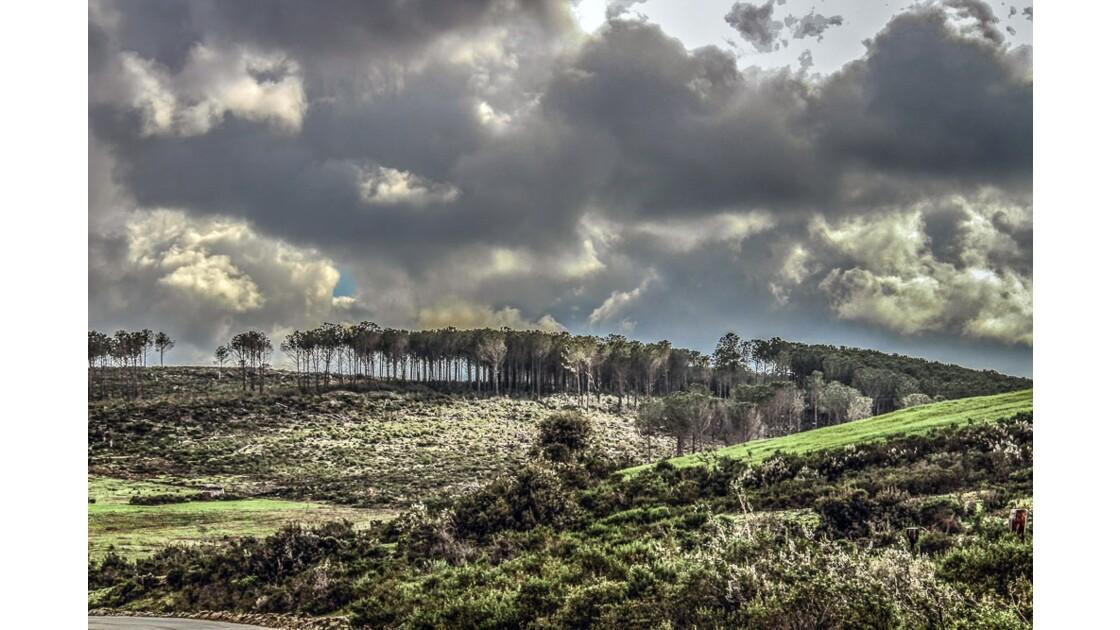 Les forêts du Nord