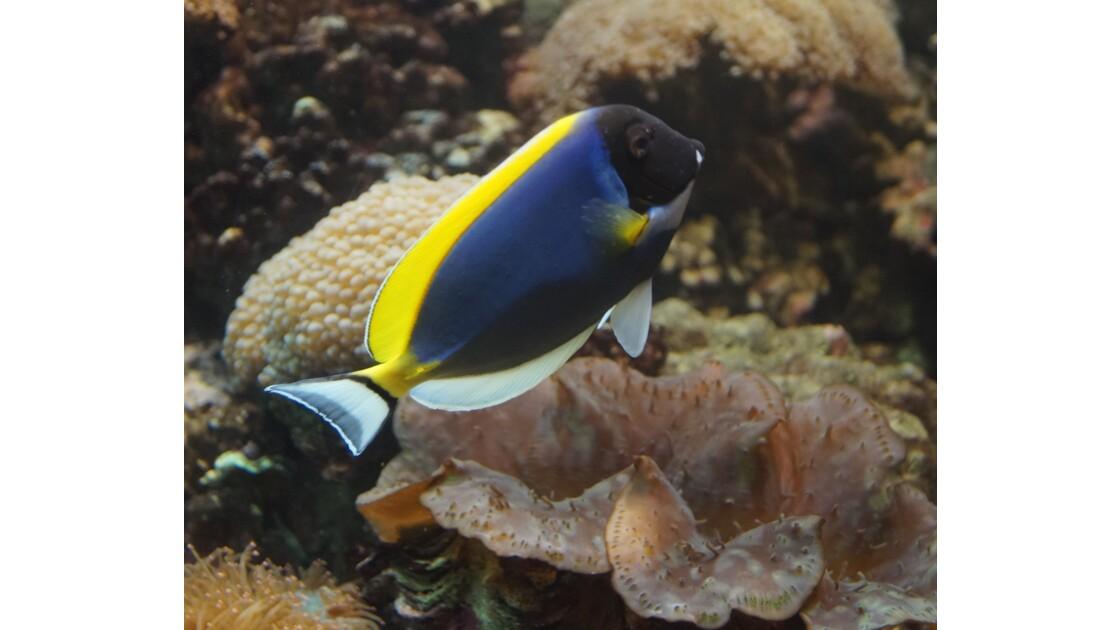 Phuket Aquarium II