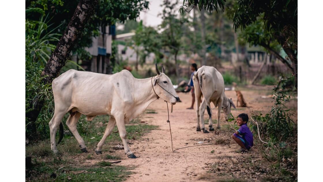 Jeune fermier cambodgien