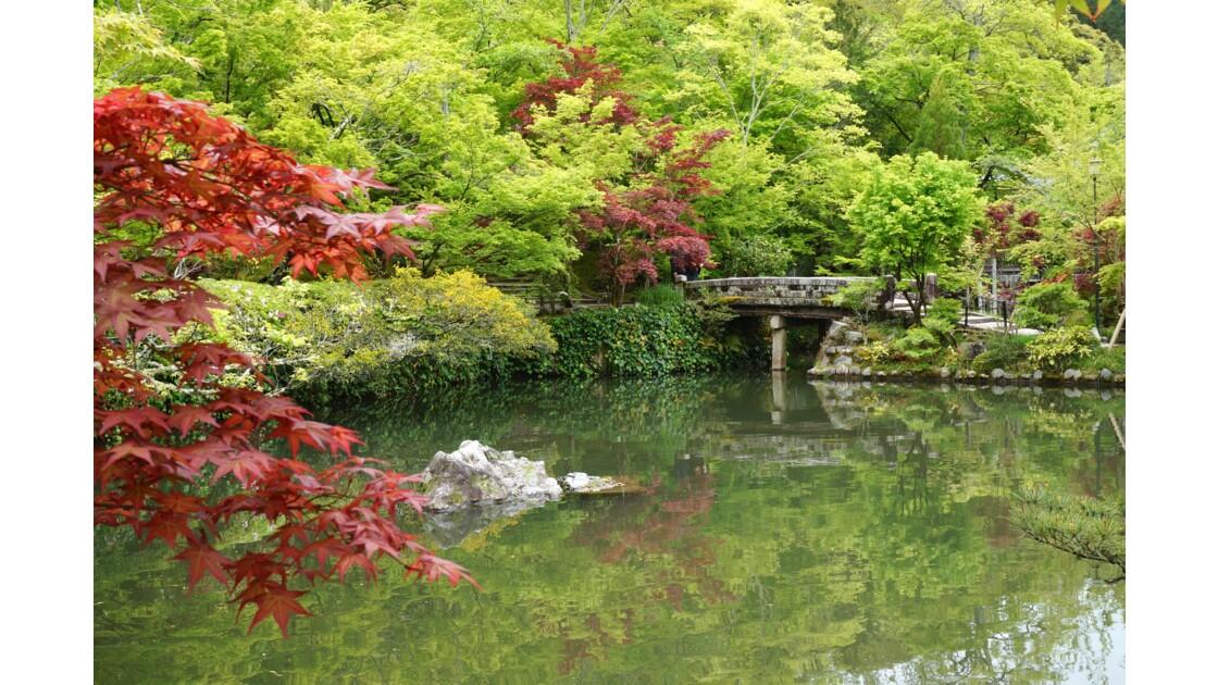 Jardin japonais, kyoto, japon