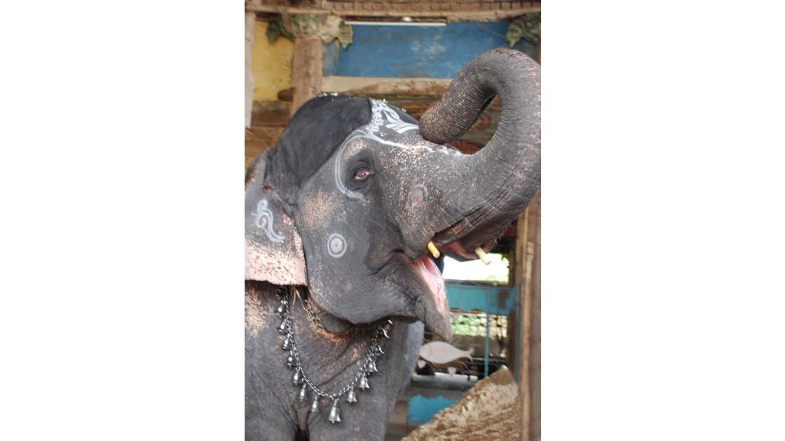 Un éléphant çà trompe