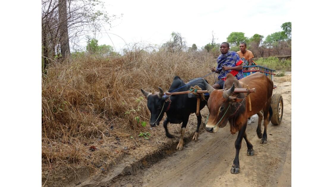 Madagascar De Morondava à Manja 14