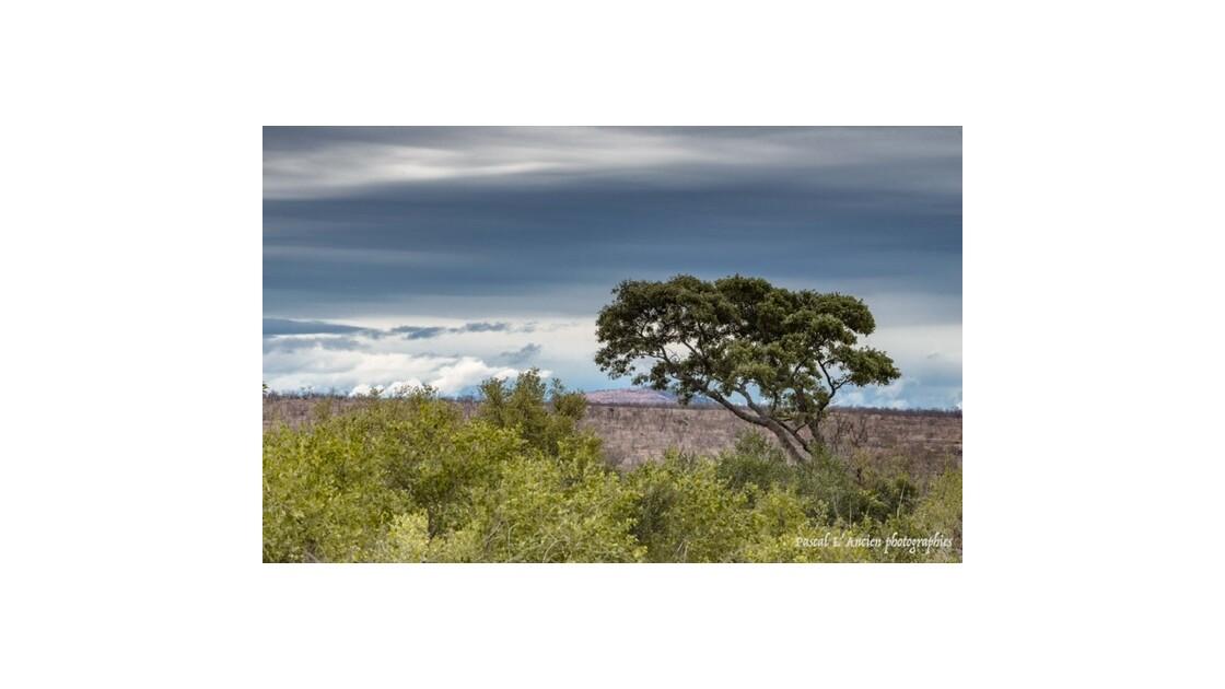 Park Kruger