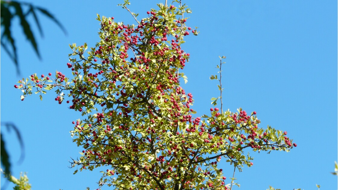 Septembre en Luberon