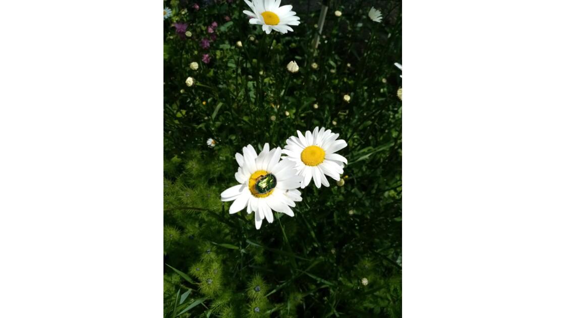 Oh la jolie fleur
