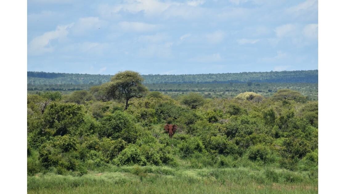 Alone in Kruger