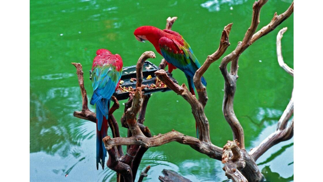 San Diego Zoo Safari Park Kupanda Botanical Garden 3