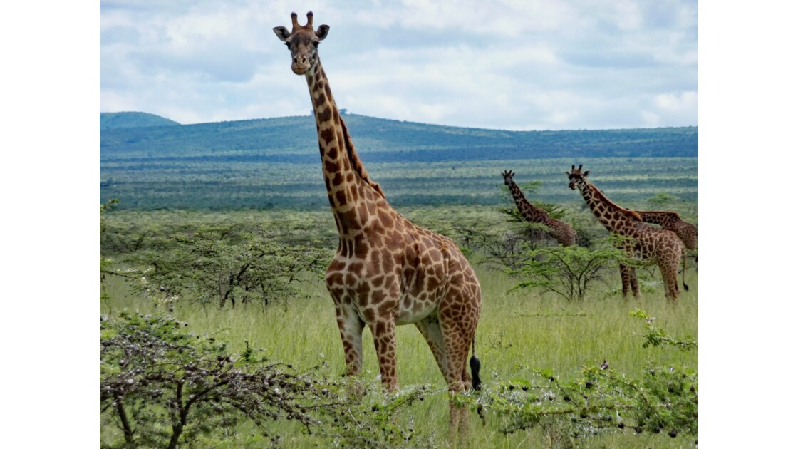 Kenya Crescent Island famille girafe 5