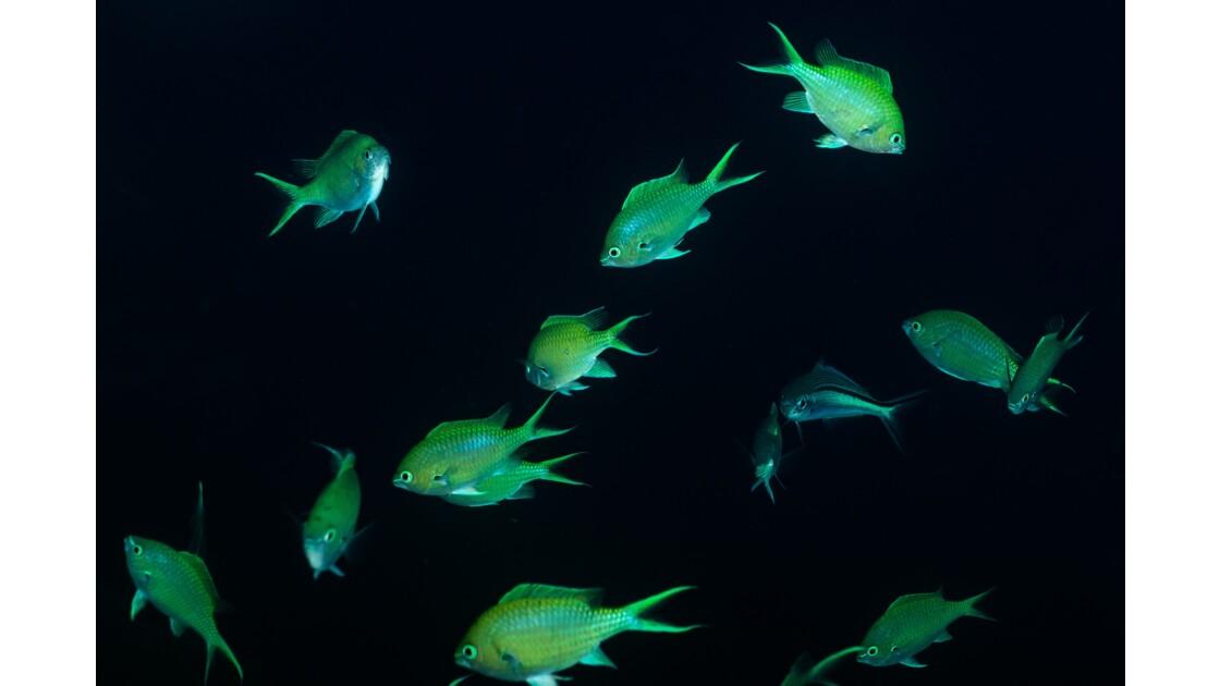 Mayotte paradis oublié