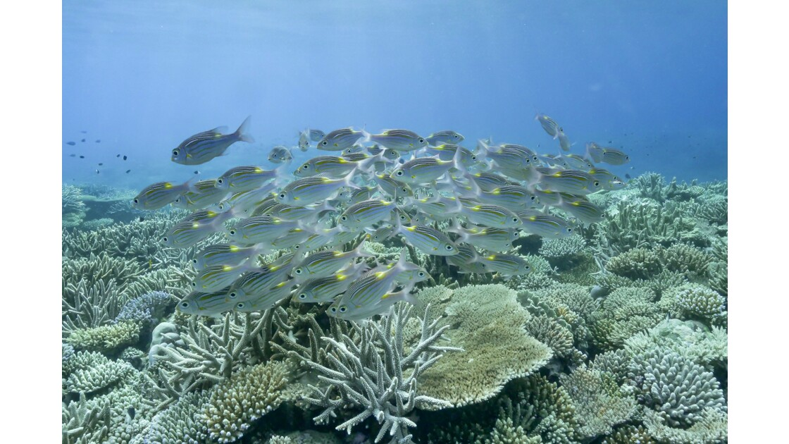 Blue lagoon Mayotte