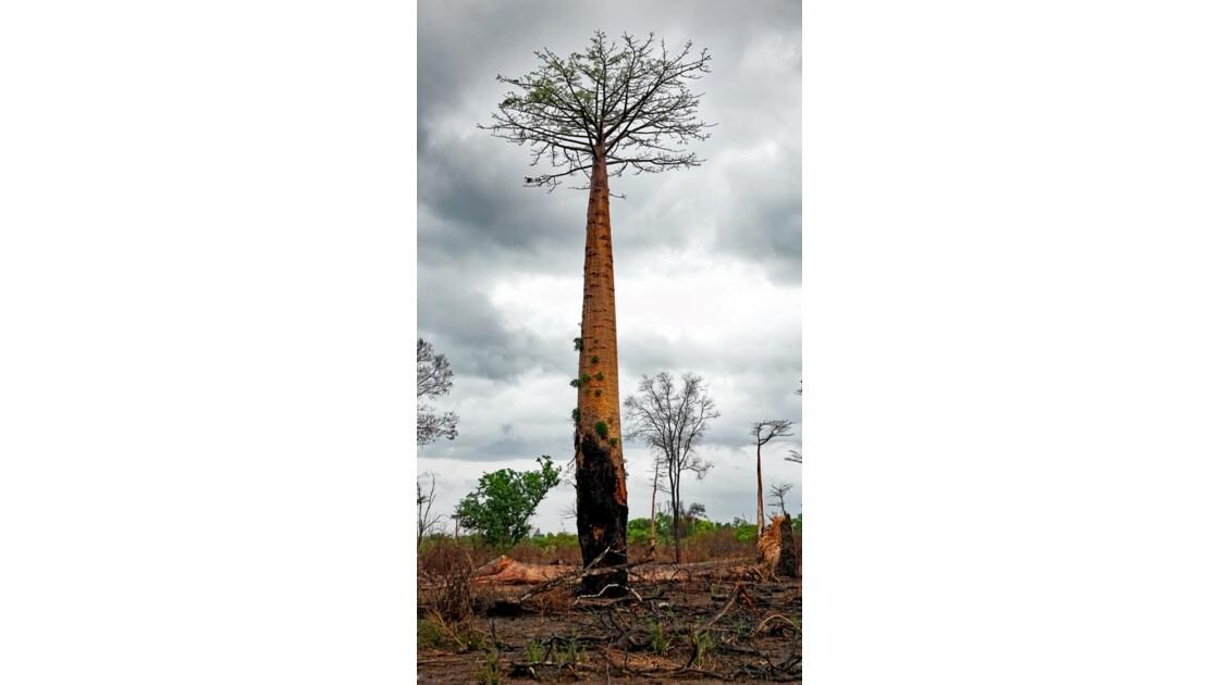 Madagascar De Morondava à Manja 12