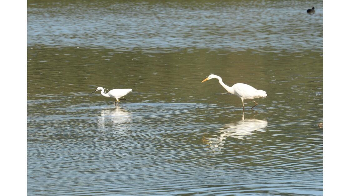 les oiseaux du lac