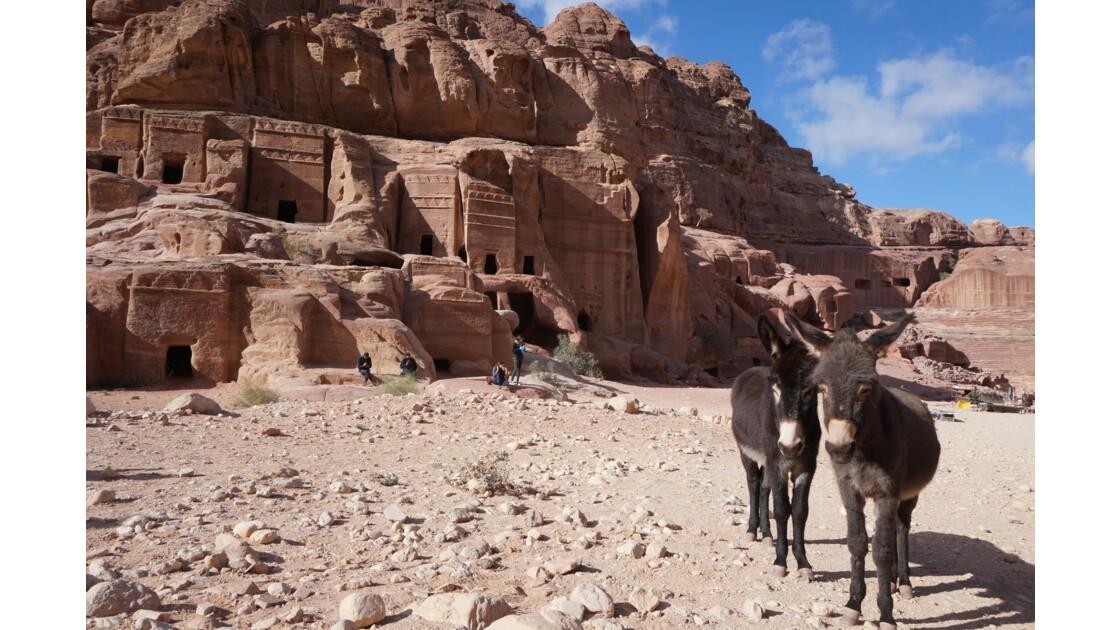 Les ânes de petra