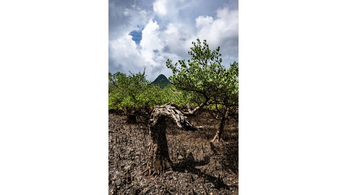 Mangrove de Chiroungui