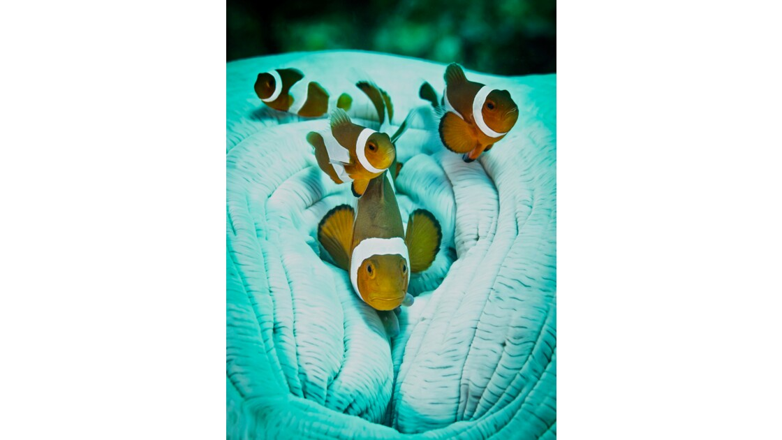 Underwater world of Malapascua Philippines