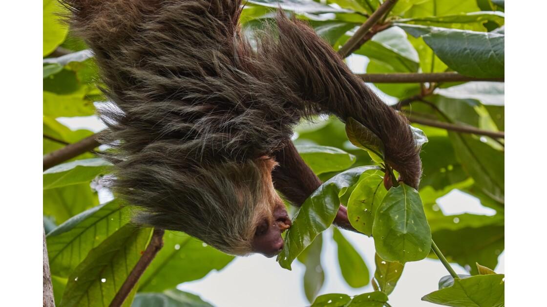 Faune du Costa Rica